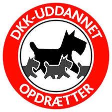 images (1) dkk